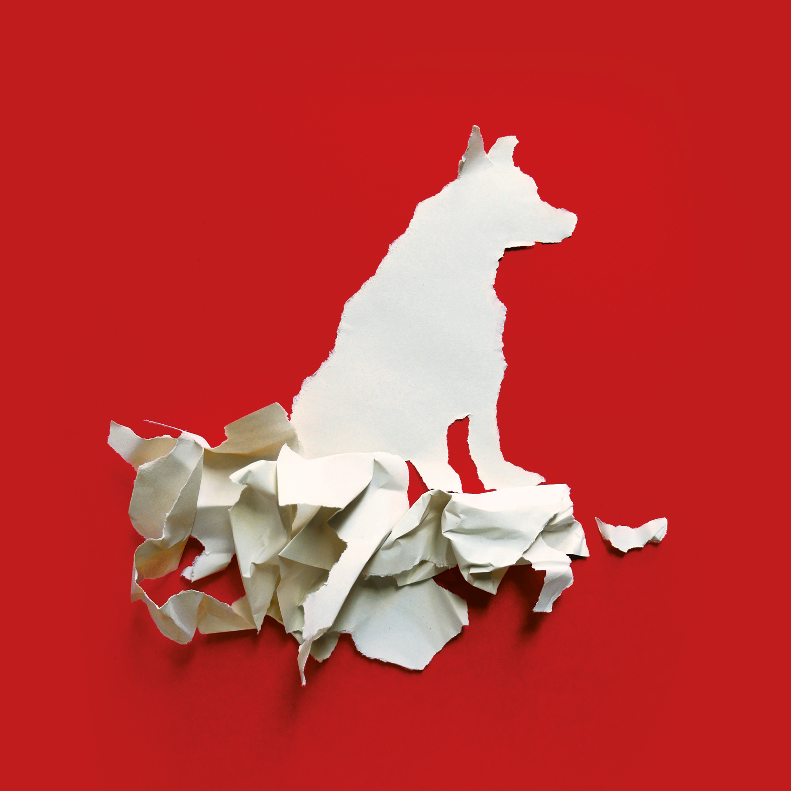 White Dog - Les Anges au plafond